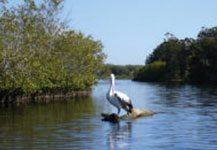 Restoration Strategy Belongil-Cumbebin Wetland Complex