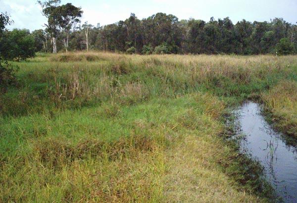 Bokarina Wetland Translocation