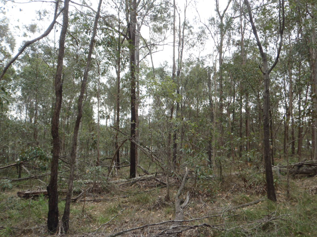 Ecological Assessment of the Helensvale Waste Transfer Station