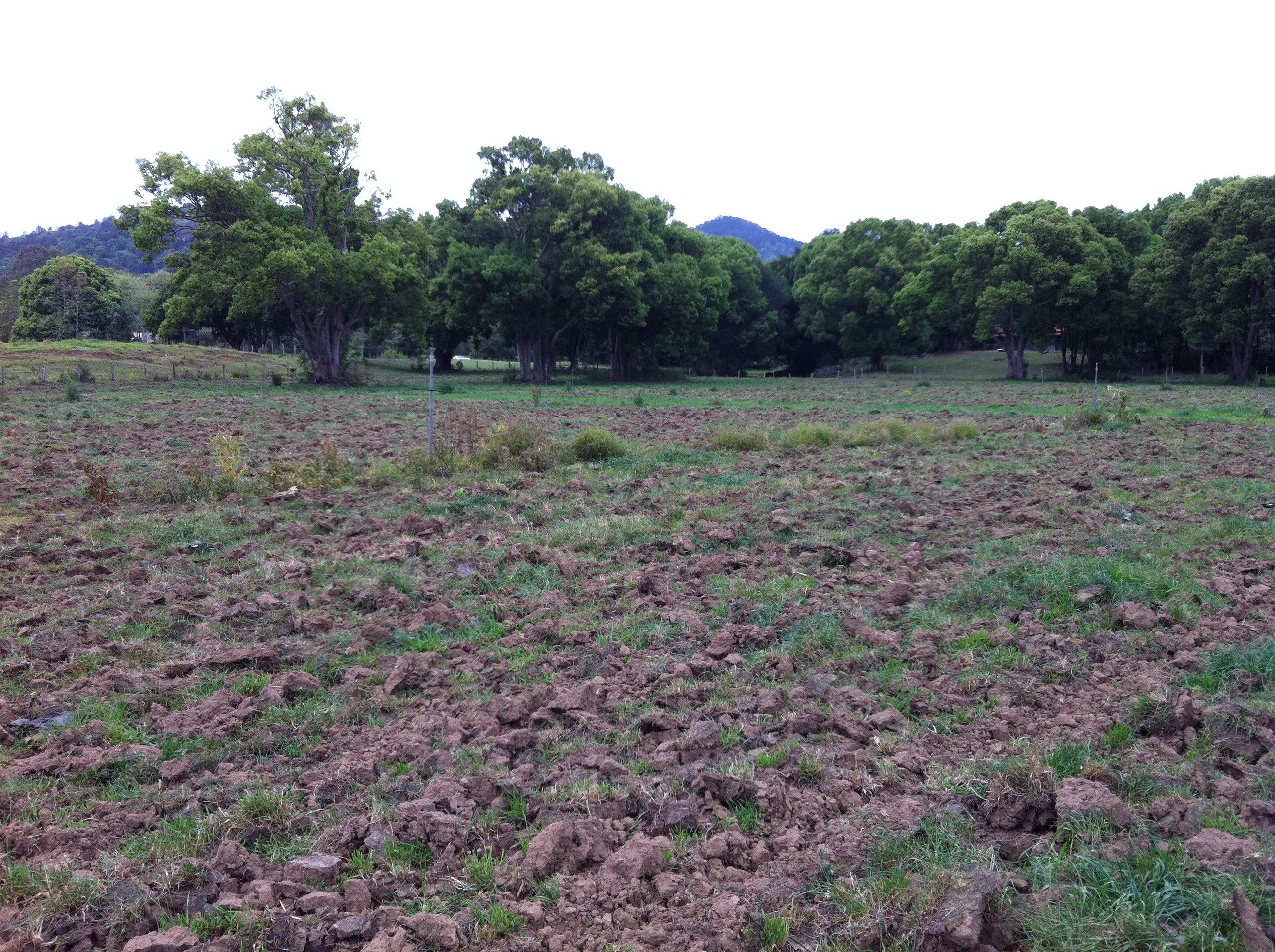Land Application of Sewage Biosolids