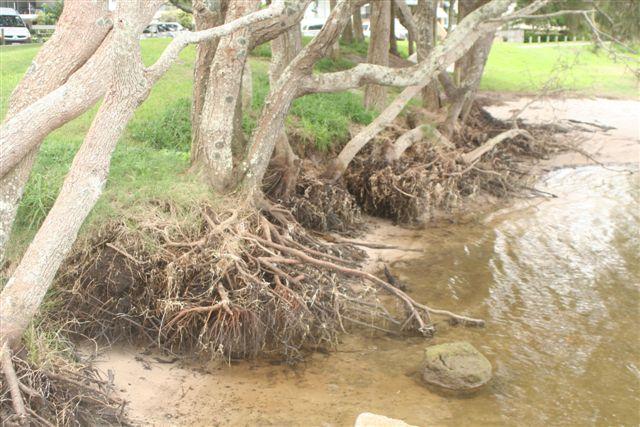 Foreshore rehabilitation options report – Golden Beach, Sunshine Coast