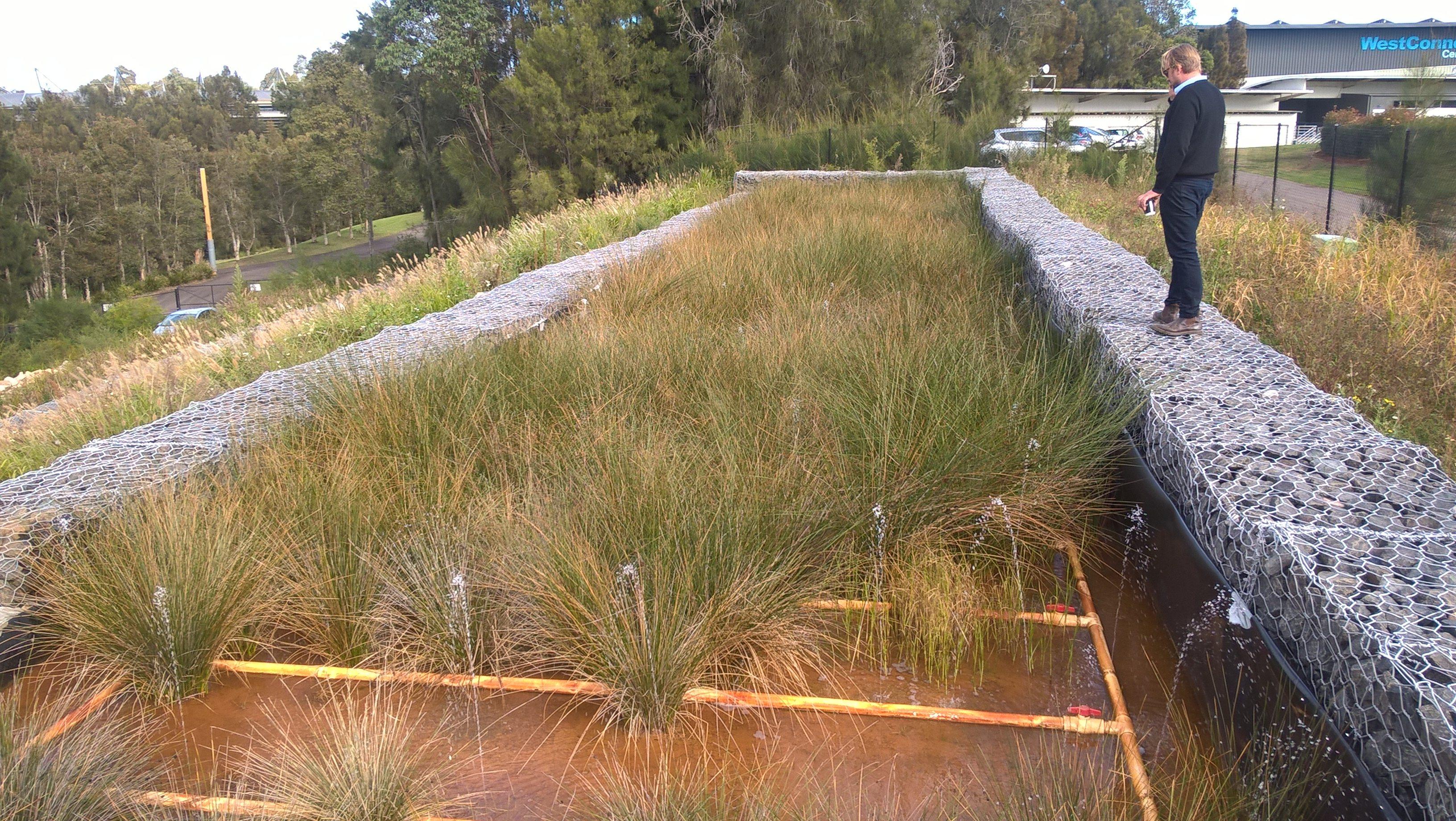 Sydney Olympic Park – Leachate Treatment Wetland and Irrigation