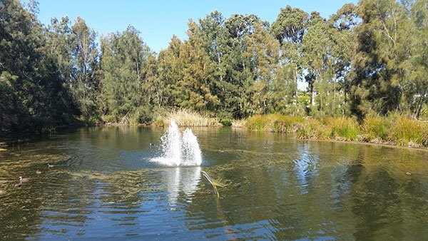 Voyager Point Park Wetland